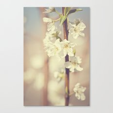 He brought me spring Canvas Print
