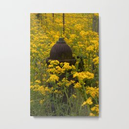 A Rusty Fire Hydrant surrounded by Yellow Wildflowers Metal Print