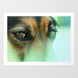 Portrait of a black dog looking to you Art Print