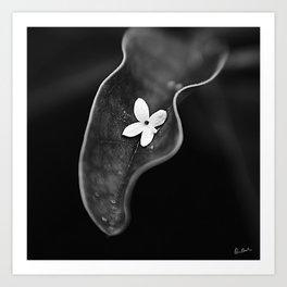 Fallen Petal #1 Art Print