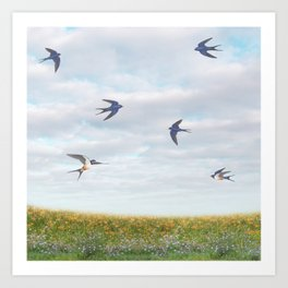 barn swallows, day lilies, and chicory Art Print