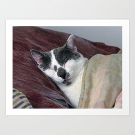Cat Napping Art Print