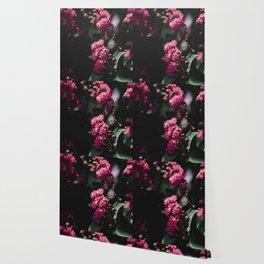 pinks iii Wallpaper