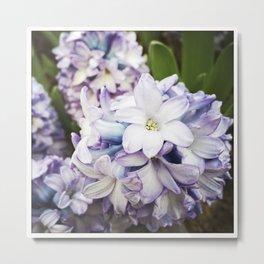 Garden of Hyacinth (Instagram) Metal Print