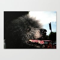 poodle Canvas Prints featuring poodle by Richard PJ Lambert