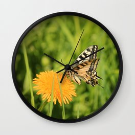 The Old World swallowtail (Papilio machaon) Wall Clock