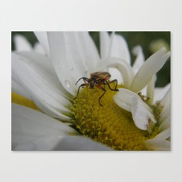 You Looking At Me? Canvas Print