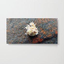 Sealife on the Rocks Metal Print