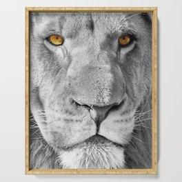 Lion Male Portrait CK Serving Tray