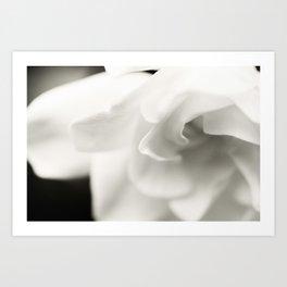 Black and White Gardenia Art Print