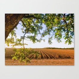 Texas Cotton Canvas Print