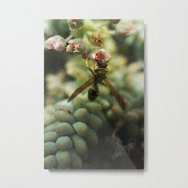 Greenhouse Wasp Metal Print