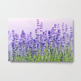 Lavender 15  Metal Print