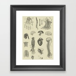 Vintage Anatomy Print Framed Art Print
