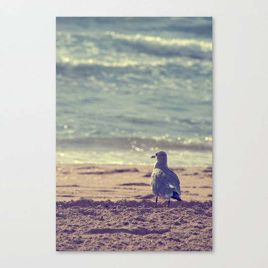 Taking it All In Canvas Print