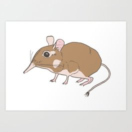 Elephant Shrew Art Print