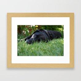 buller Framed Art Print