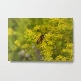 Yellow Flower and Honey Bee Metal Print