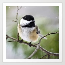 Chickadee Bird Art Print