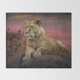 African Female Lion in the Grass at Sunset Throw Blanket