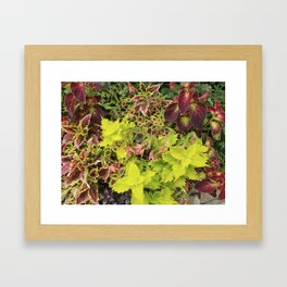 Foliage Fiesta With A Touch Of Begonia Framed Art Print