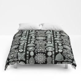 Ernst Haeckel - Scientific Illustration - Diatomea Comforters