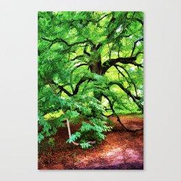 Century Oak Tree Canvas Print