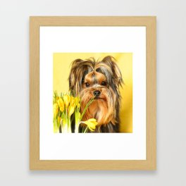 Spring Yellow Crocuses With Yorkie Puppy #decor #society6 Framed Art Print