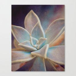 Botanical -- Blue Ghost Plant Succulent (Graptopetalum paraguayense ) Canvas Print