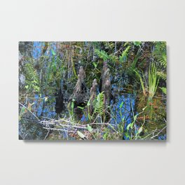 Cypress Transitions Metal Print