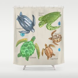 Sea Turtle Types Shower Curtain