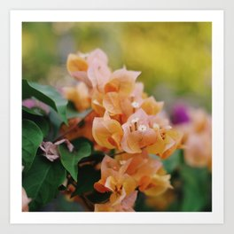 soft orange blooms Art Print