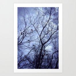 sky Fall Art Print