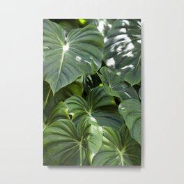 Philodendron Gloriosum Metal Print