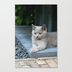 Bikkel the cat ! Canvas Print