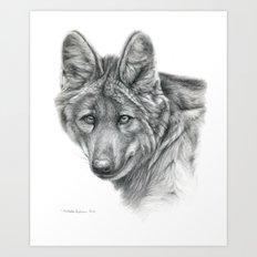 Maned Wolf G040 Art Print