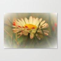 daisy Canvas Prints featuring Daisy by Falko Follert Art-FF77