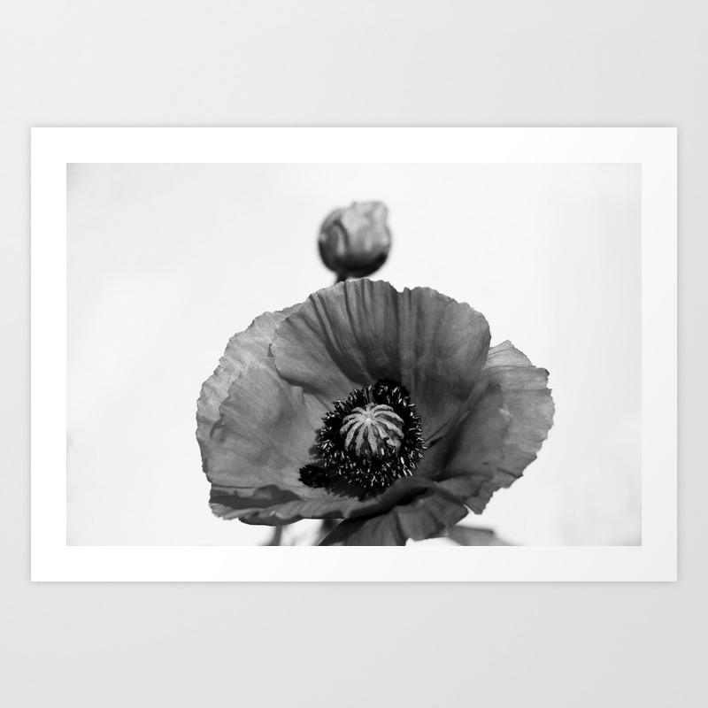 Black White Poppy Flowers Poppy Flower Art Print By Edenlens