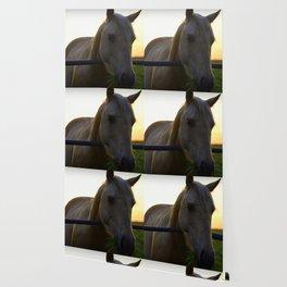 Beautiful Horse at Sunset Wallpaper