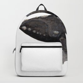 Northern right whale (Eubalaena glacialis) Backpack