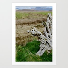 Rooted in Bogs Art Print