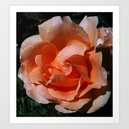 Peach Sunshine Art Print