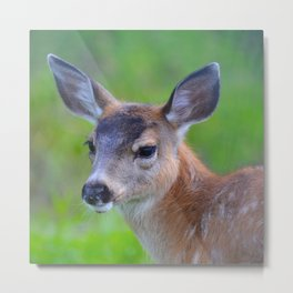 Sitka Black-Tail Fawn Metal Print