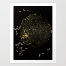 Full Moon Sunflower Art Print
