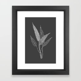 Black and White Botanical Drawing Framed Art Print