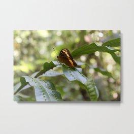 Jungle Wings Metal Print