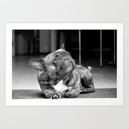 Black & White Frenchbully Art Print
