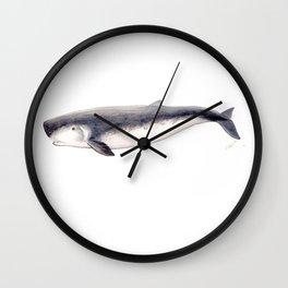Pygmy sperm whale Wall Clock