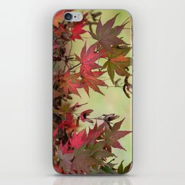 Maple Leaves iPhone Skin