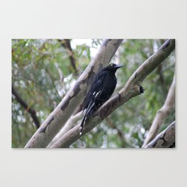Native Bird After the Rain Canvas Print